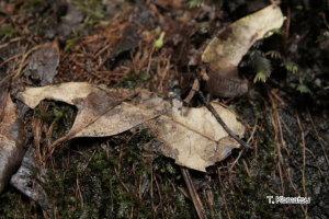 光る落ち葉